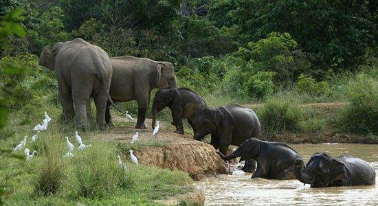 Kui Buri National Park Elephant Reserve